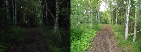 The difference between the way the entrance to the forest looked on those days. The ambient light was the same.