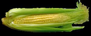 corn-667678_640