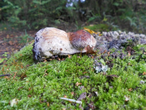 Bowing mushroom and microcosm Earth Photo: me